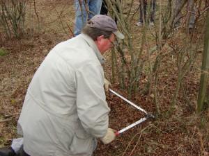 Image of man pruning