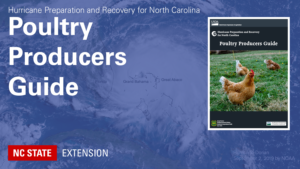 Hurricane background with text Hurricane Preparation and Recovery for North Carolina Poultry Producers Guide