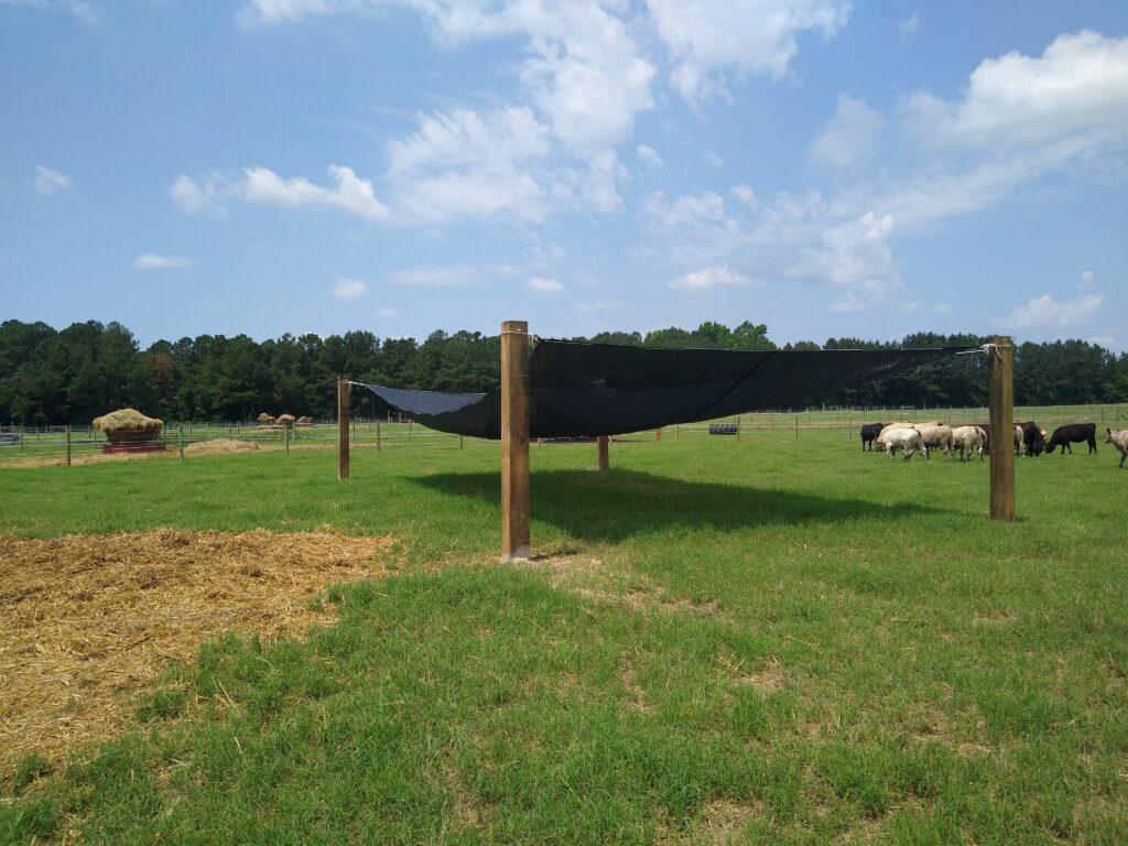 Livestock and shade