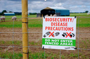 Cover photo for Biosecurity: Steps to Keeping Your Livestock Healthy